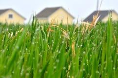 De lenteregendruppels op gras met gele loodsen op de achtergrond stock foto