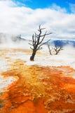 De Lentes van de kanarie, Yellowstone stock afbeeldingen