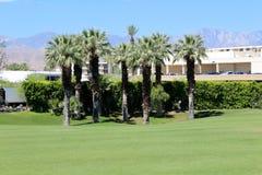 De lentes van de palm Royalty-vrije Stock Afbeelding