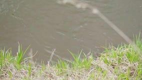 De lentescène met mening aan meer door gras voorraad Rustig landschap stock footage