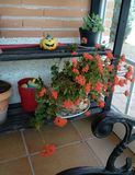 De lentescène van Nice in de tuin stock afbeeldingen