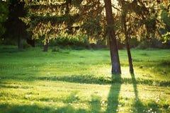 De lentesprookjesland Stock Afbeelding