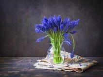 De lentestilleven met muscari Royalty-vrije Stock Afbeeldingen