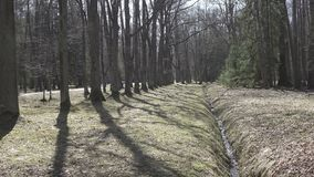 De de lentestroom wegens het ontdooien van sneeuw wordt gevormd stroomt in een sloot in het bos in zonnige dag die stock videobeelden