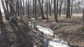 De de lentestroom wegens het ontdooien van sneeuw wordt gevormd stroomt in een sloot in het bos in zonnige dag die stock video