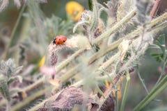 De lentetak met een lieveheersbeestje en de lentebloemen in backgroun stock foto