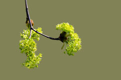 De lentetak met jonge bladeren Stock Afbeeldingen