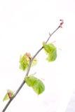 De lentetak met verse groene bladeren Stock Afbeeldingen