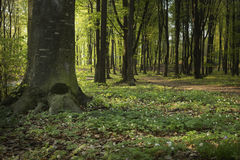 De lentetijd in bos Royalty-vrije Stock Fotografie