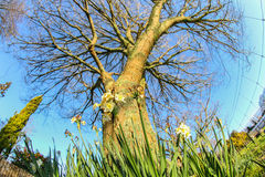 De lentetijd in de zon Stock Afbeeldingen