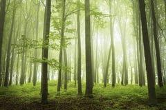 De lentetijd in fogy bos royalty-vrije stock foto