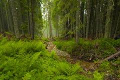 De lentetijd in fogy bos Stock Foto