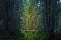 De lentetijd in fogy bos Royalty-vrije Stock Foto's