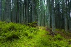 De lentetijd in fogy bos Stock Afbeeldingen