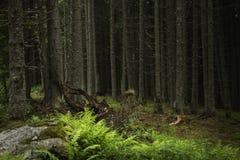 De lentetijd in fogy bos Stock Afbeelding