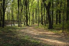 De lentetijd in fogy bos Royalty-vrije Stock Fotografie