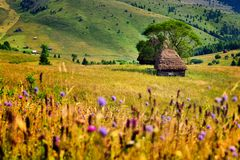 De lentetijd in Karpatische bergen met oud landbouwershuis Stock Afbeelding