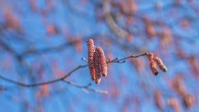 De de lentetijd… nam bladeren, natuurlijke achtergrond toe Stock Foto's