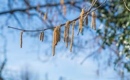 De de lentetijd… nam bladeren, natuurlijke achtergrond toe Stock Afbeeldingen