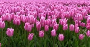 De lentetijd in Nederland Royalty-vrije Stock Fotografie