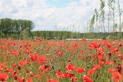 De lentetijd in Piemonte Stock Foto's