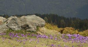 De lentetijd in de Rila-bergen, Bulgarije stock afbeelding