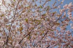 De lentetijd in Stadspark ` Stadtpark ` in Wenen, Oostenrijk royalty-vrije stock afbeeldingen