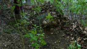 De lentetuin het schoonmaken Tuinman die met harkbladeren harken in binnenplaats stock videobeelden
