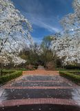 De lentetuin met Bloeiende Bomen Stock Afbeeldingen