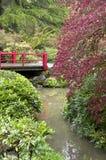 De lentetuin na regen Stock Afbeeldingen