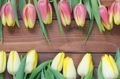 De lentetulpen stock foto