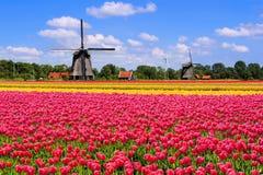 De lentetulpen en Nederlandse windmolens Stock Foto's