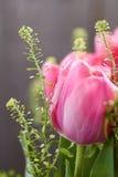 De lentetulpen met waterdalingen Royalty-vrije Stock Afbeelding