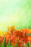 De lentetulpen op gebied Stock Afbeeldingen