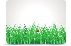 De lenteuithangbord met gras Royalty-vrije Stock Fotografie