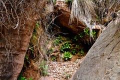 De lentevegetatie in Zion royalty-vrije stock afbeeldingen
