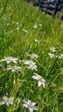 De lentevernieuwing stock afbeelding