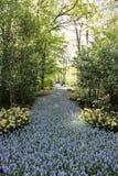 De lenteversheid royalty-vrije stock fotografie