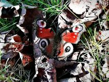 De lentevlinder op een zonnige dag royalty-vrije stock foto's