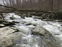 De lentevloed bij Friend's-Kreek in Maryland Royalty-vrije Stock Afbeelding