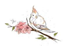 De lentevogel Royalty-vrije Stock Fotografie
