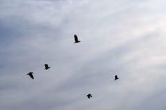 De lentevogels 1 stock fotografie