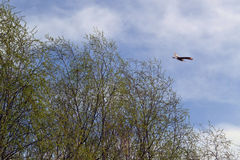 De lentevogels 2 royalty-vrije stock afbeelding