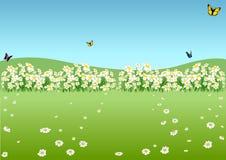 De lenteweide Royalty-vrije Stock Afbeeldingen