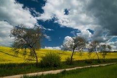 De lenteweide Stock Afbeeldingen