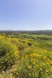De lenteweide in Duizend Eiken Californië Royalty-vrije Stock Foto's