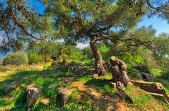 De lenteweide met groene boom, gras, rotsen en duidelijke blauwe hemel bij de bovenkant van bergen van Buyukada-eiland, Istanboel Stock Afbeeldingen