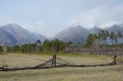 De lenteweiland in de Tunkinskaya-vallei bij de voet Sayan-Bergen, Buryatia Royalty-vrije Stock Foto