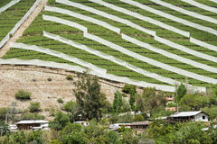 De lentewijngaard in Chili Royalty-vrije Stock Foto's