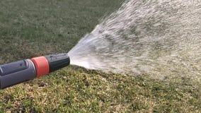 De lentezaailingen Lage die spruiten van peper thuis in dozen wordt gekweekt De spruiten van peper van zaad worden gekweekt dat stock videobeelden